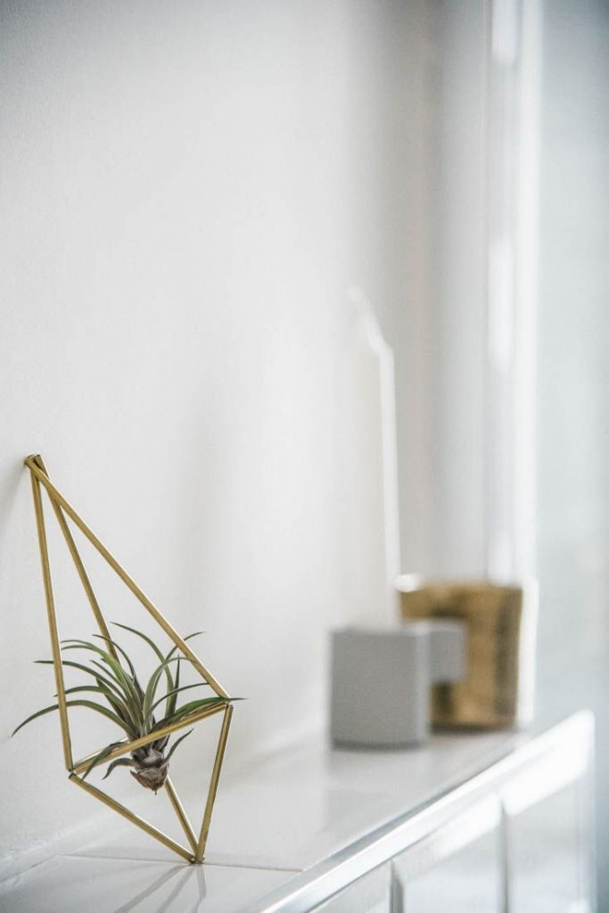 Bottega botanica airplant Tillandsia